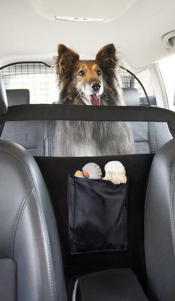 Kutyakorlát autóba