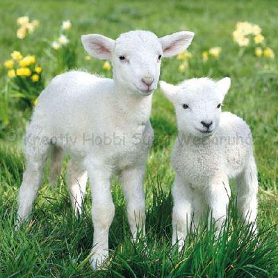 Szalvéta - bárány -Lambs