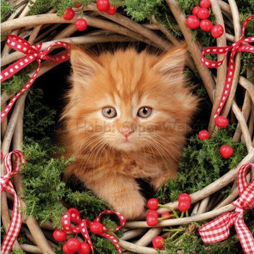 Szalvéta - cica karácsonyi - Christmas Cat