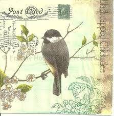 Szalvéta - madár, fekete cinege