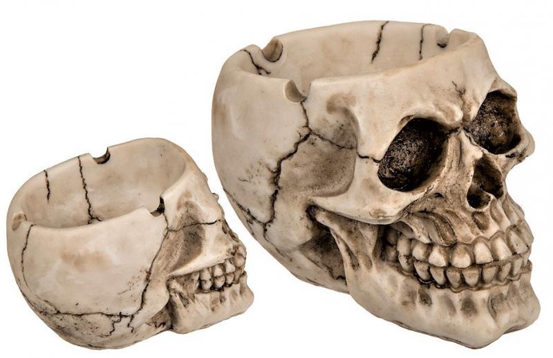koponya hamutartó csontszín