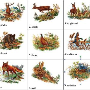 .porcelán erdei-vadas katalógus pdf