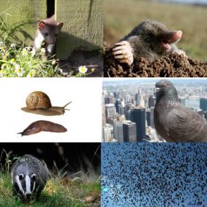 Kis állat és kártevők elleni védekezés