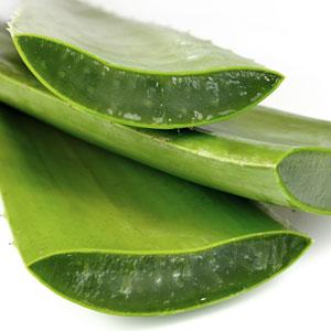 Aloe Ginkgo masszázs termékek