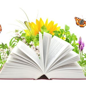Egyéb könyvek