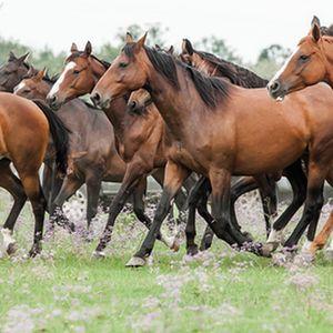 Lótenyésztés, lovassport