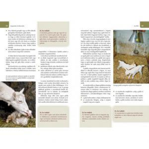 Kecsketartás - Gondozás, ápolás. Sajtkészítés. Hústermékek
