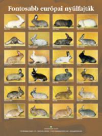 Fontosabb európai nyúlfajták - poszter