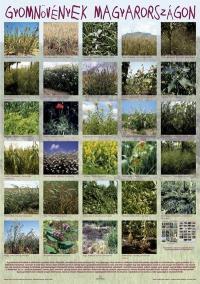 Gyomnövények Magyarországon - poszter