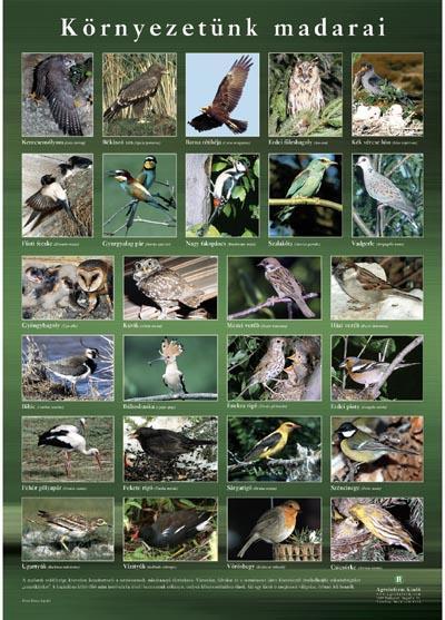 Környezetünk madarai - poszter