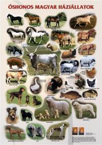 Őshonos magyar háziállatok – poszter