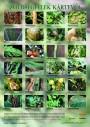 Zöldségfélék kártevői - poszter