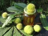 Szelidgesztenye méz