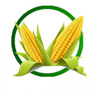Kétcsövűségre hajlamos kukorica