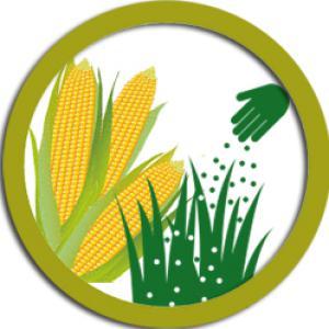 Kukorica vetőmag csomagajánlat