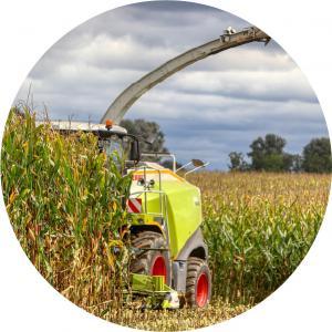 Siló kukorica vetőmag