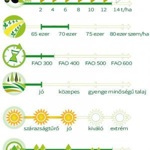 Kiskun 4340 kukorica vetőmag másolata (FAO 350)