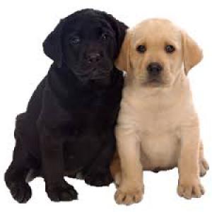 Kutyáknak