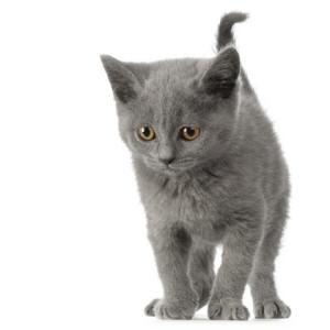 Macskáknak