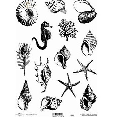 Kristály fólia - csigák, kagylók