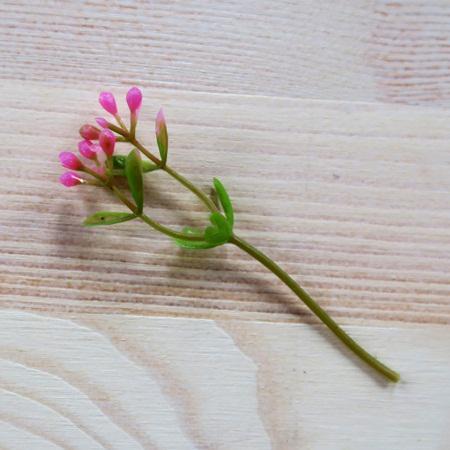 Rózsaszín bogyós növényszál, hossza: 8 cm.