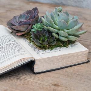 Növények, kertészet
