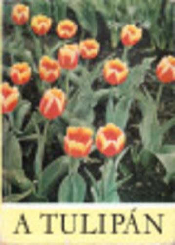 Sipos Elek: A tulipán