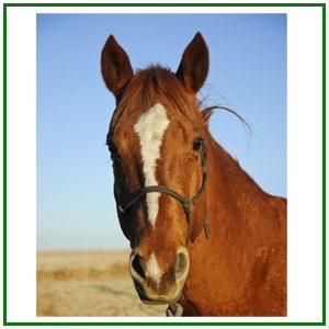 Étrendkiegészítők lovaknak