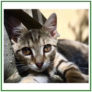 Termékek cicáknak